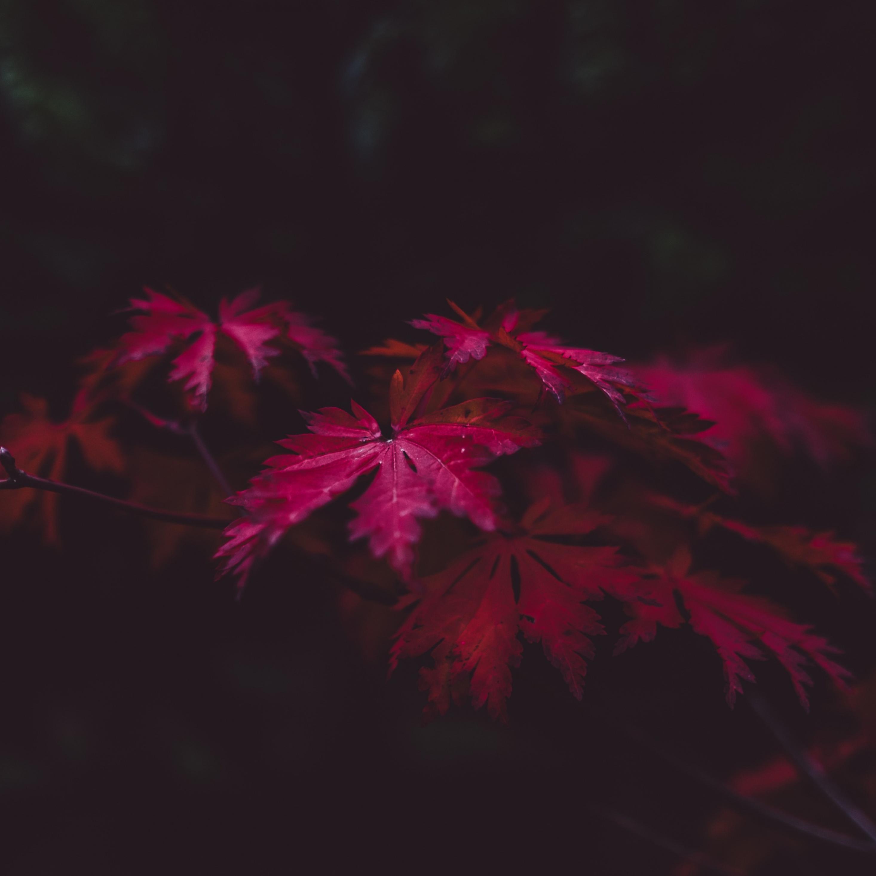 2932x2932 Red Leaves 4k Ipad Pro Retina ...