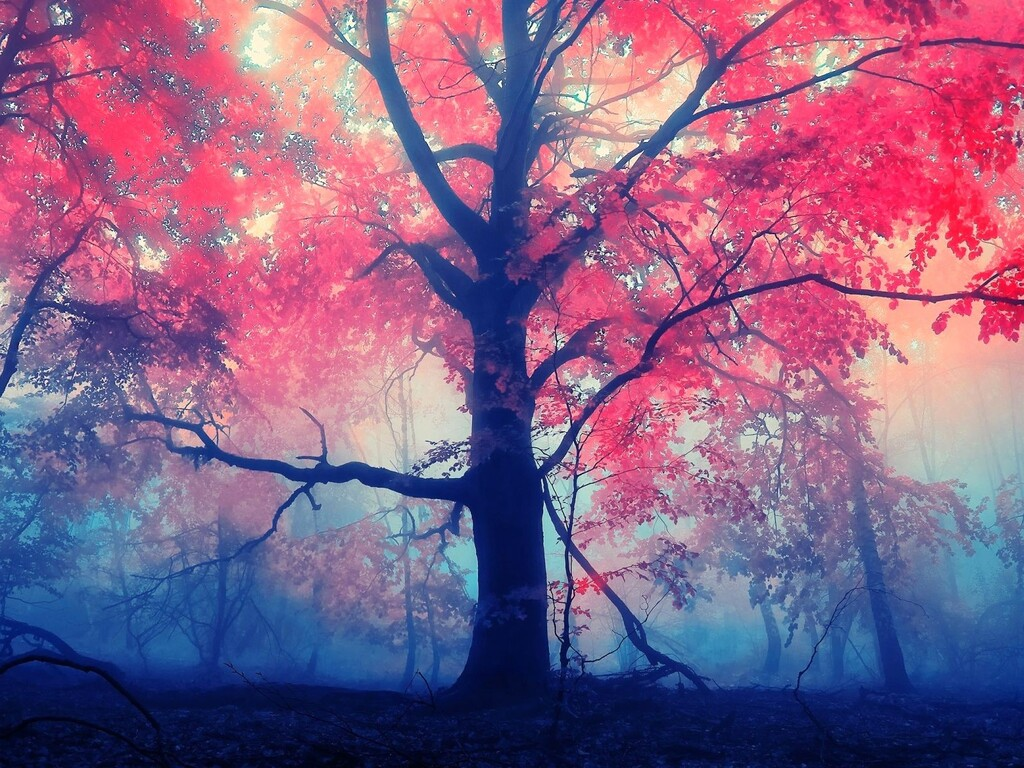 red-leaves-tree.jpg