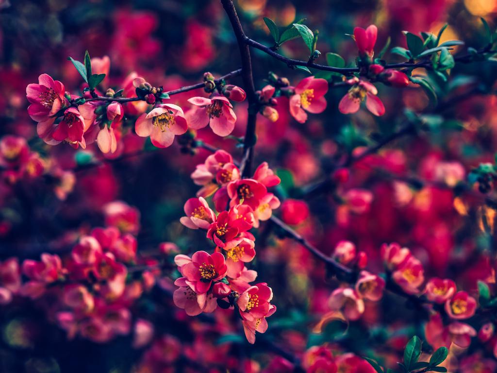 red-pearls-flowers-4k-hu.jpg