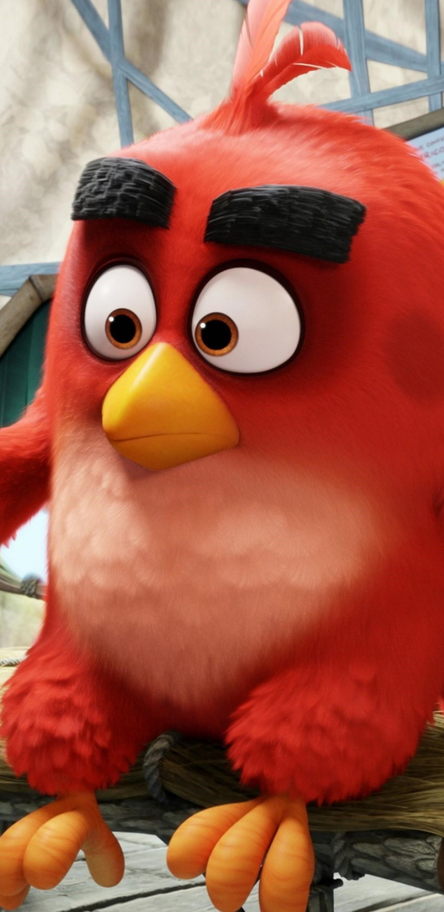 1440x2960 Red The Angry Birds Samsung Galaxy Note 9 8 S9 S8 S8 Qhd Hd 4k Wallpapers Images Backgrounds Photos And Pictures