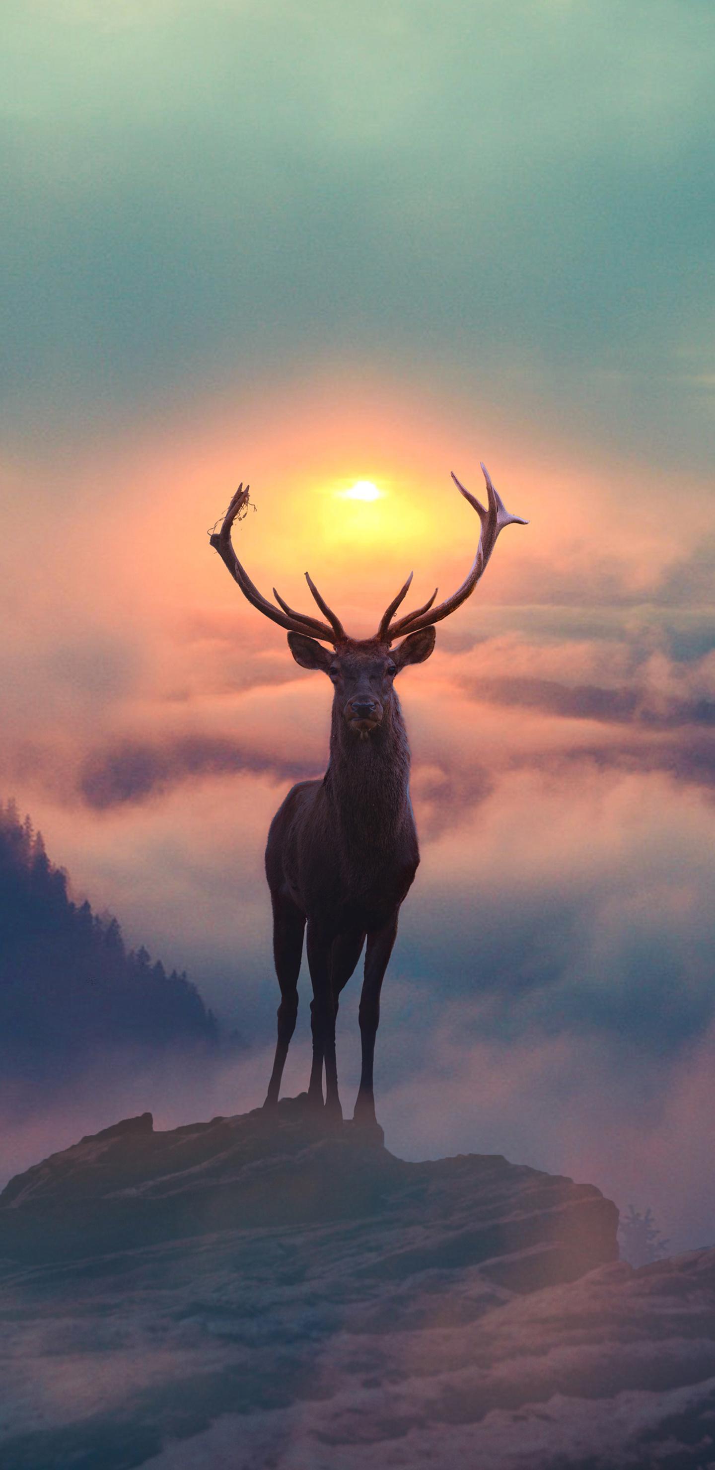 reindeer-morning-glory-ly.jpg