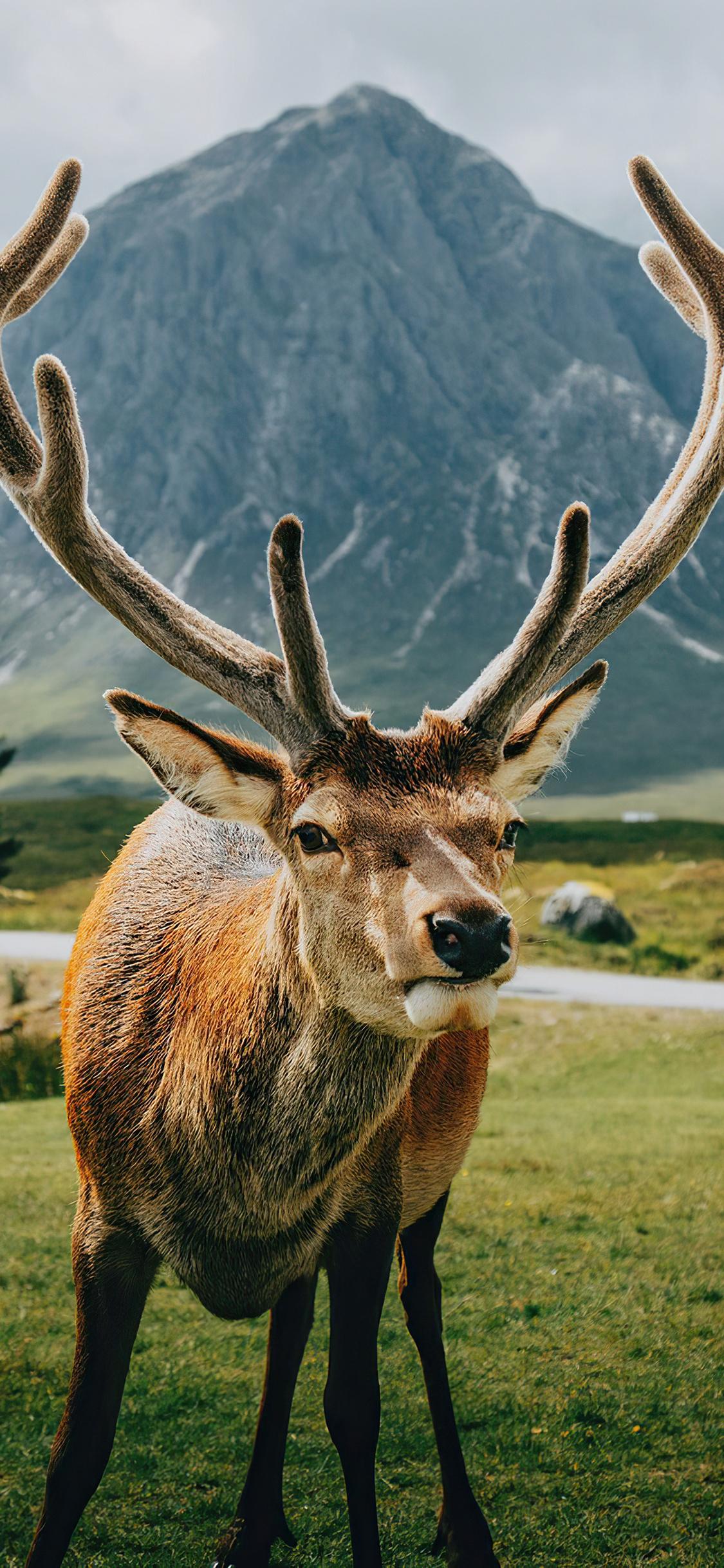 reindeer-open-field-landscape-4k-jq.jpg