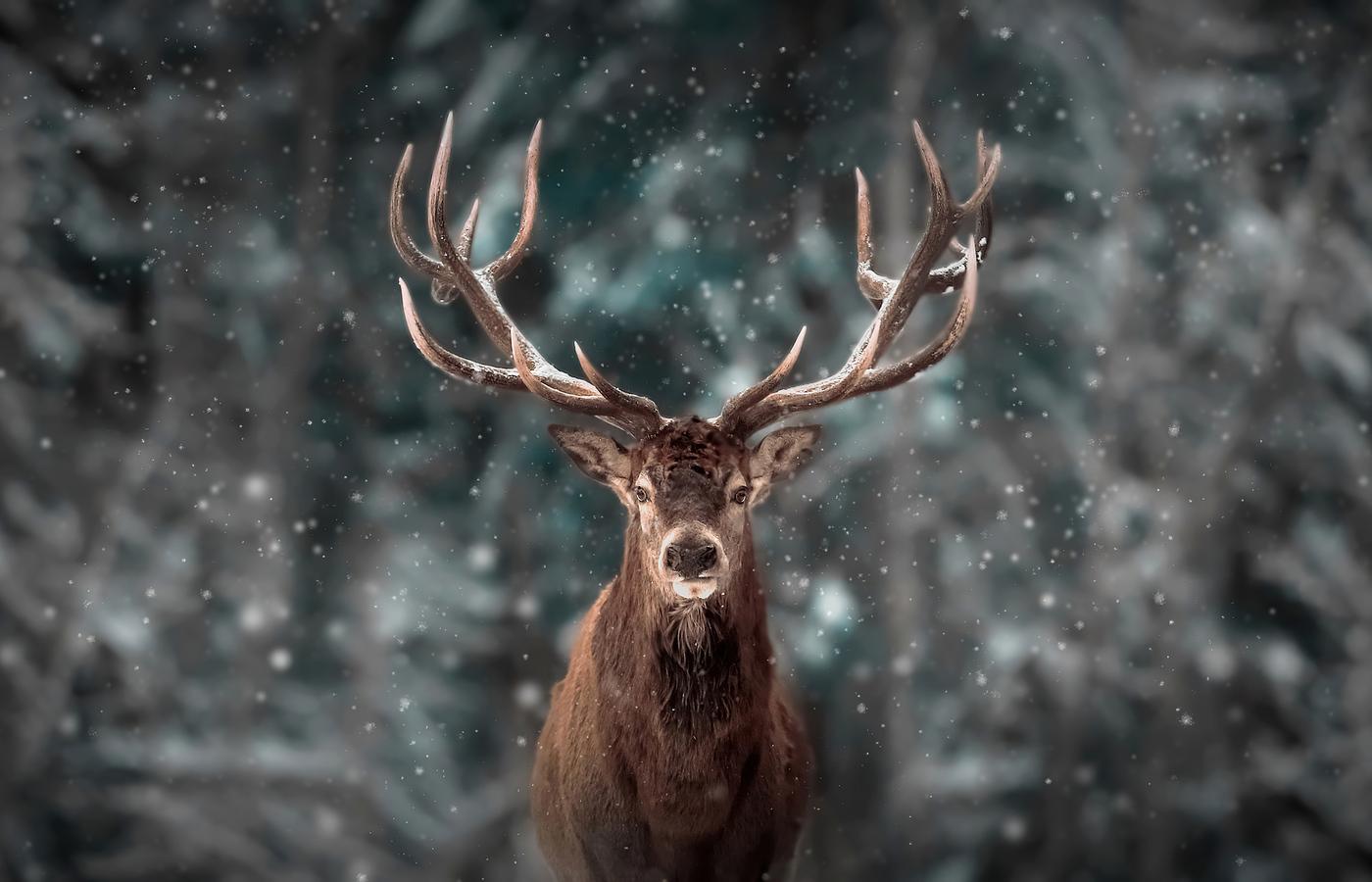 reinderr-snow-4k-kh.jpg