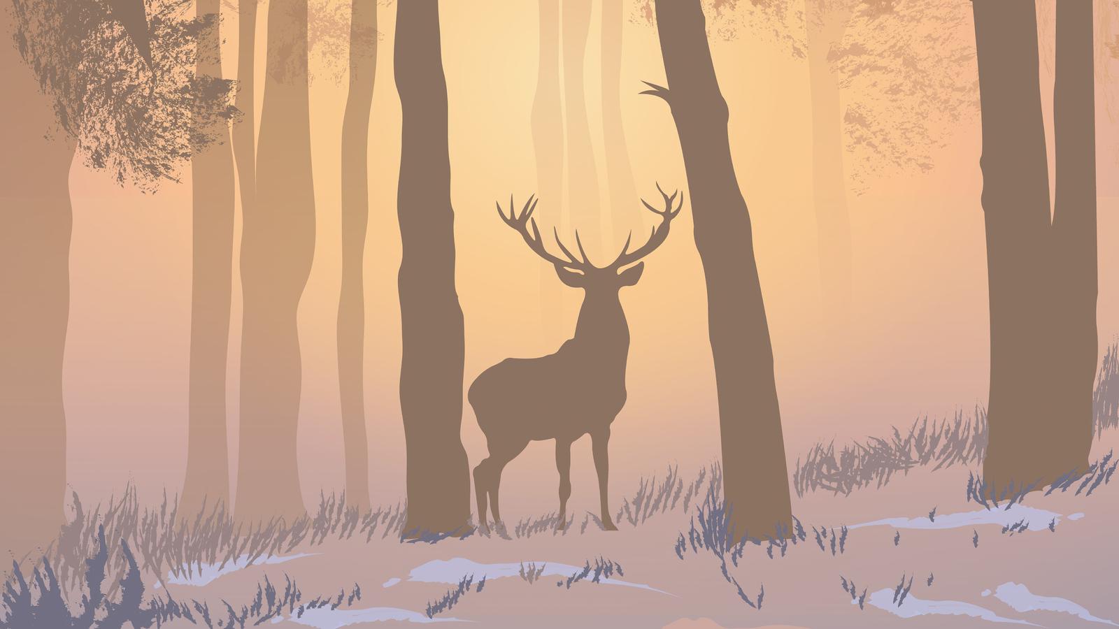 reinnder-forest-foggy-morning-5k-o0.jpg