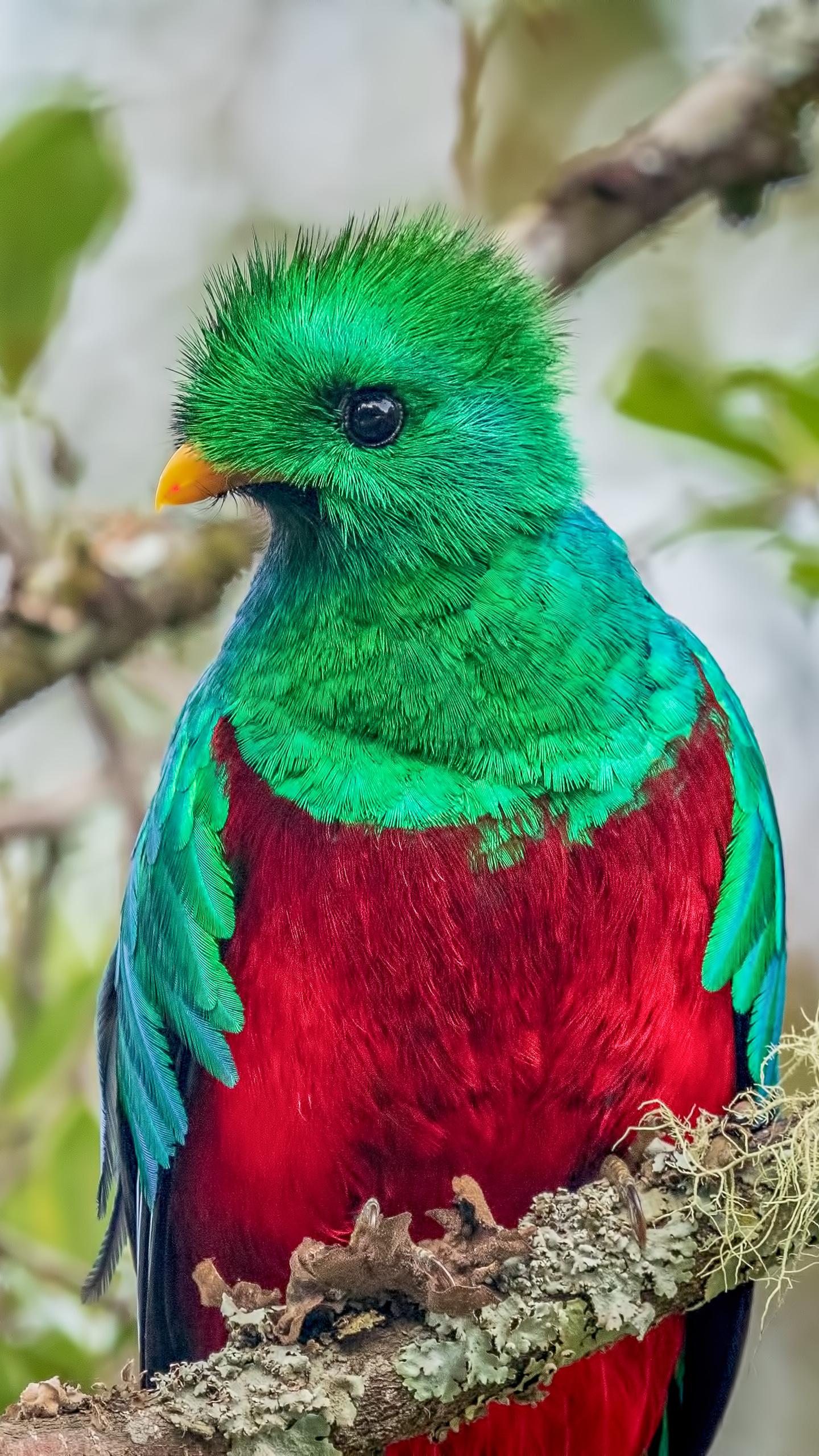 resplendent-quetzal-10.jpg