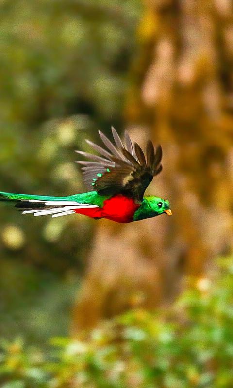 resplendent-quetzal-4k-0p.jpg