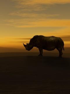 rhino-nw.jpg
