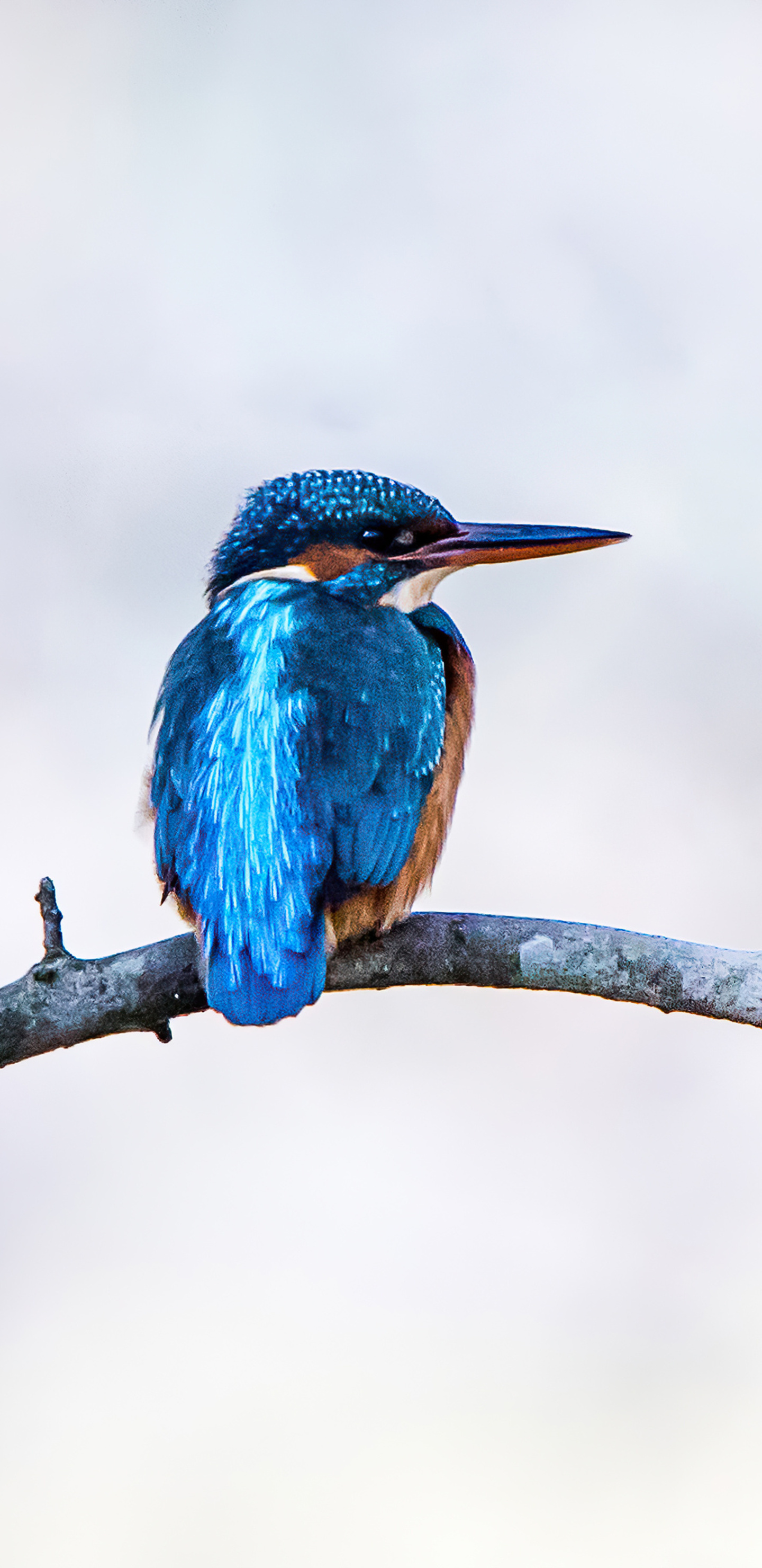 river-kingfisher-4k-w8.jpg