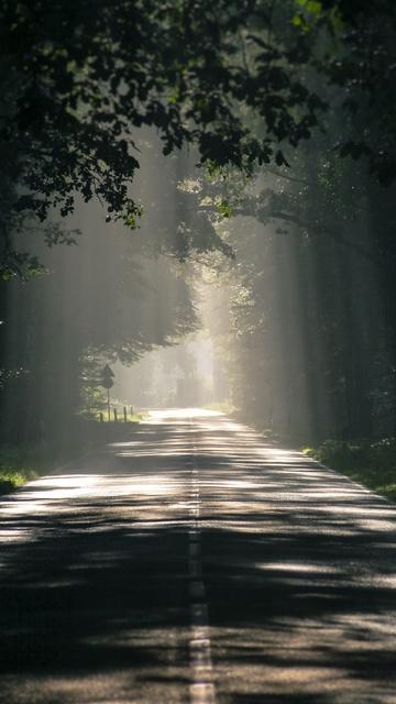road-avenue-trees-t9.jpg