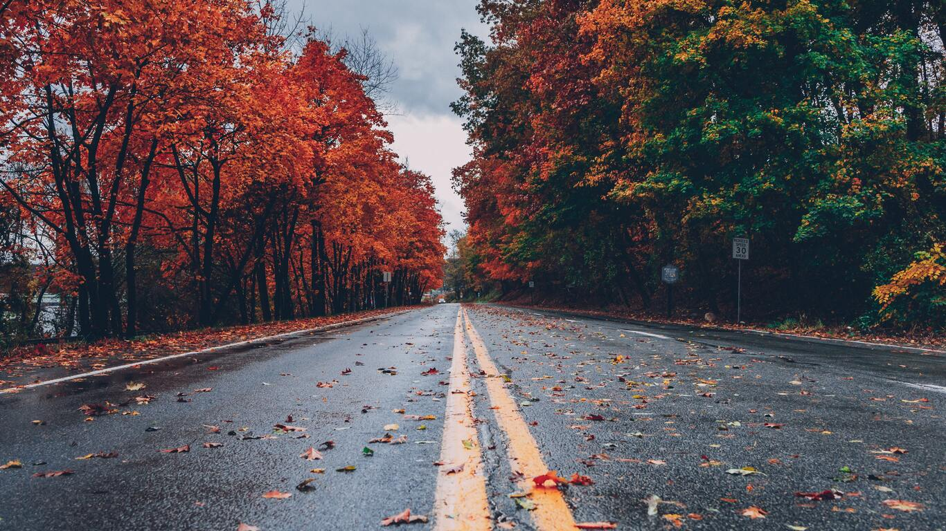 road-between-autumn-trees-5k-34.jpg