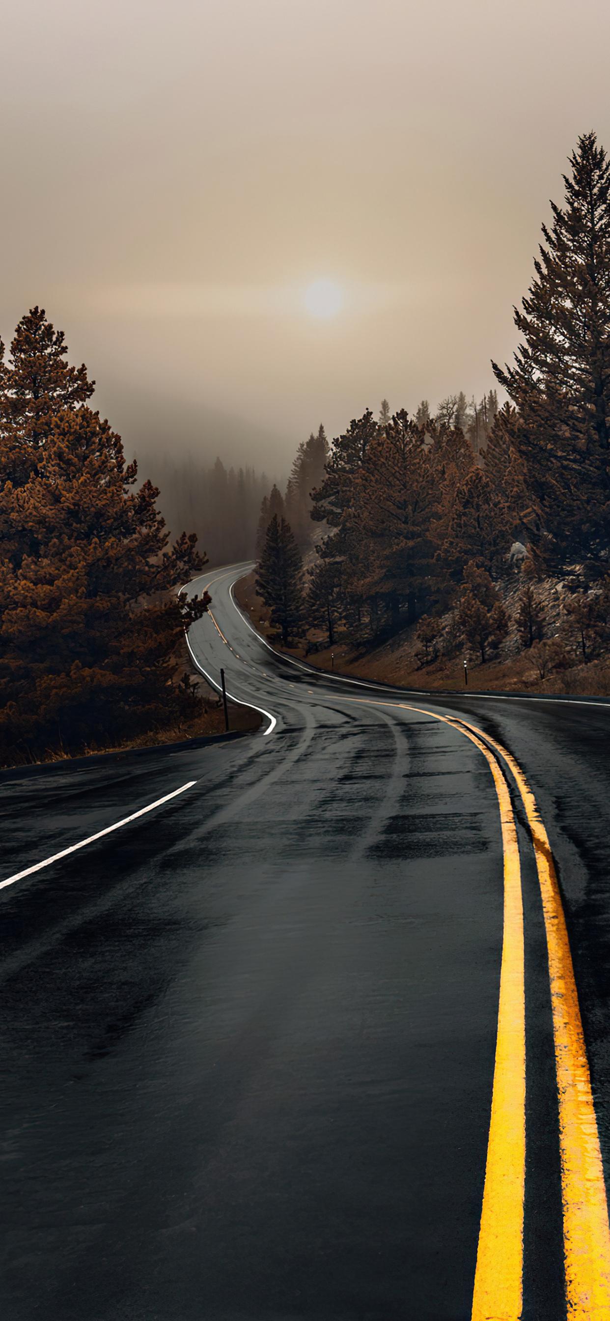 road-between-woods-en.jpg