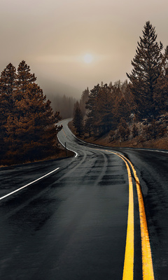 road-between-woods-en.jpg