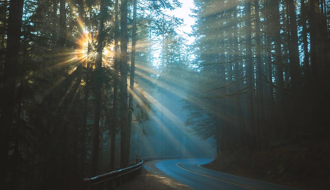 road-sunbeams-between-trees-4k-rc.jpg