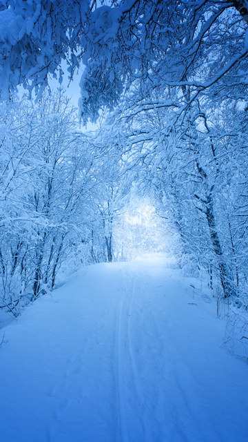 road-trees-covered-with-snow-zj.jpg