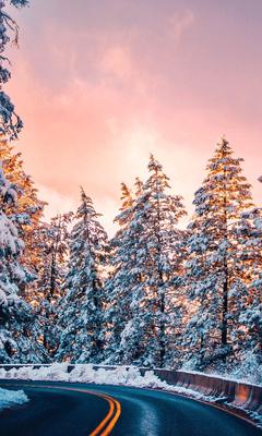 road-trees-winter-4k-tm.jpg