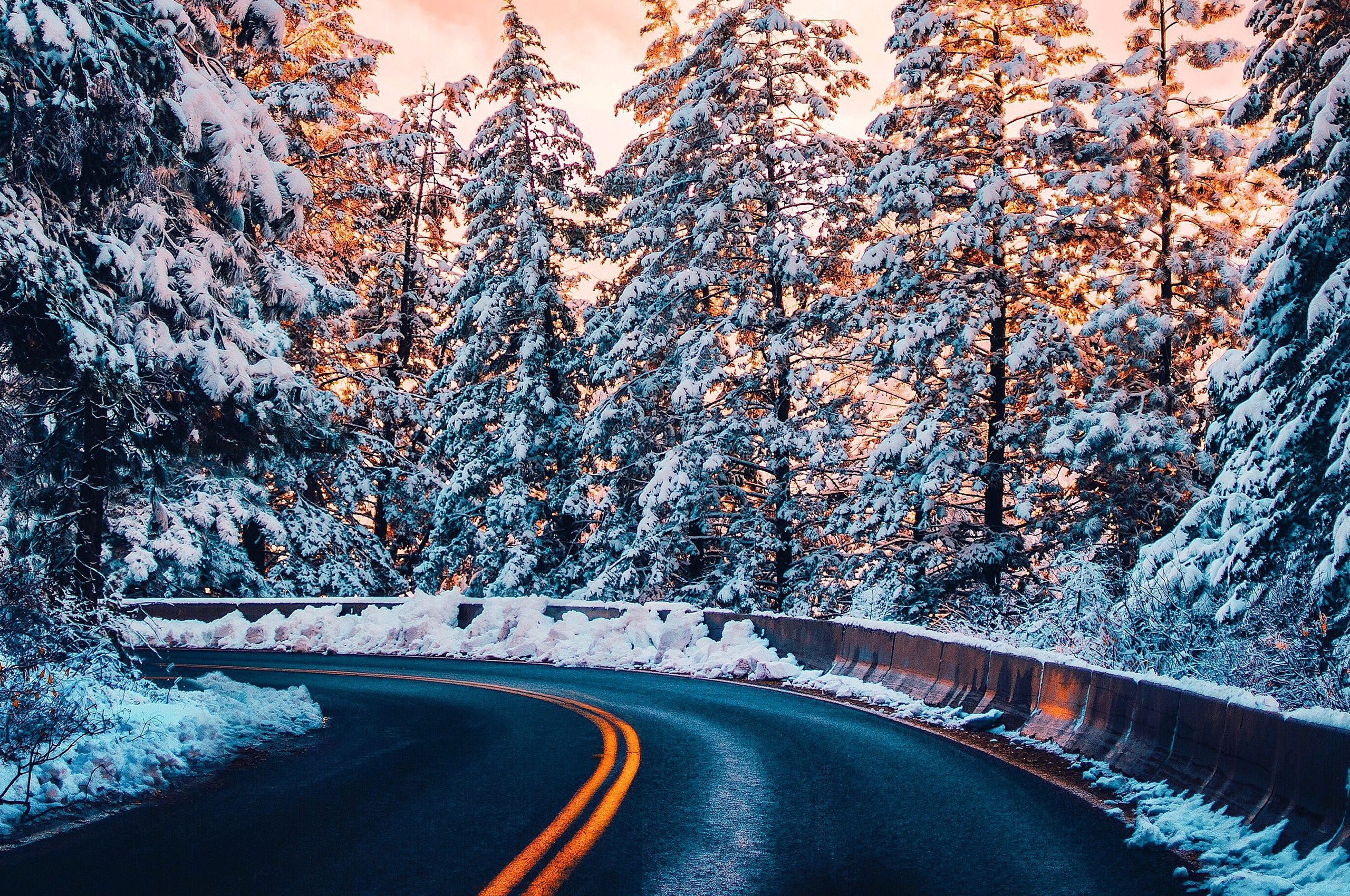 road-trees-winter-4k-tm.jpg