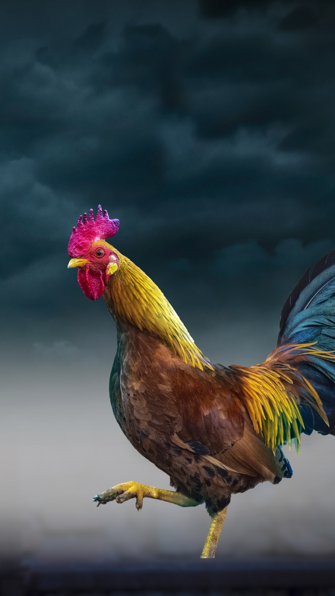 rooster-l3.jpg