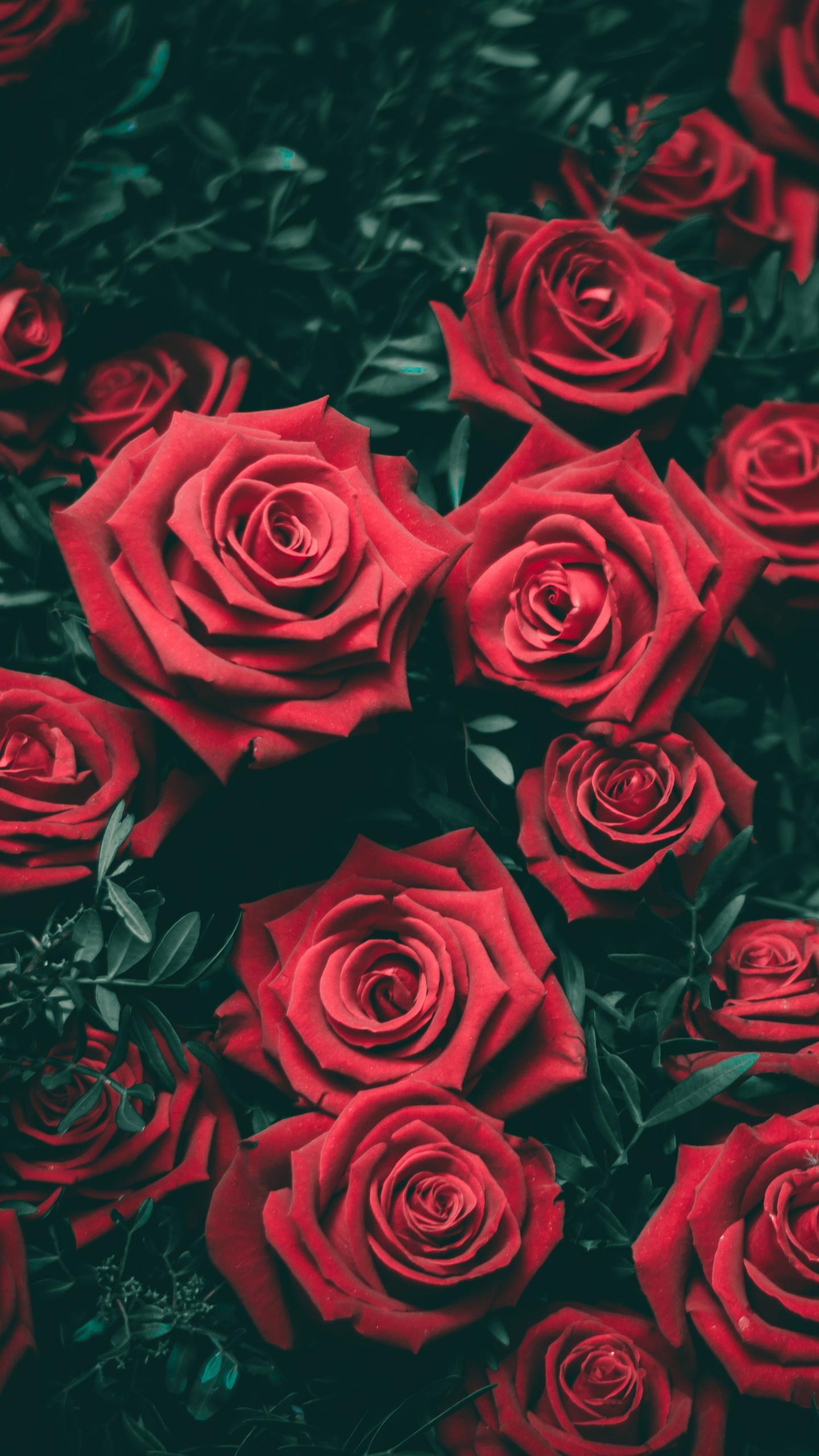 rose-5k-8n.jpg