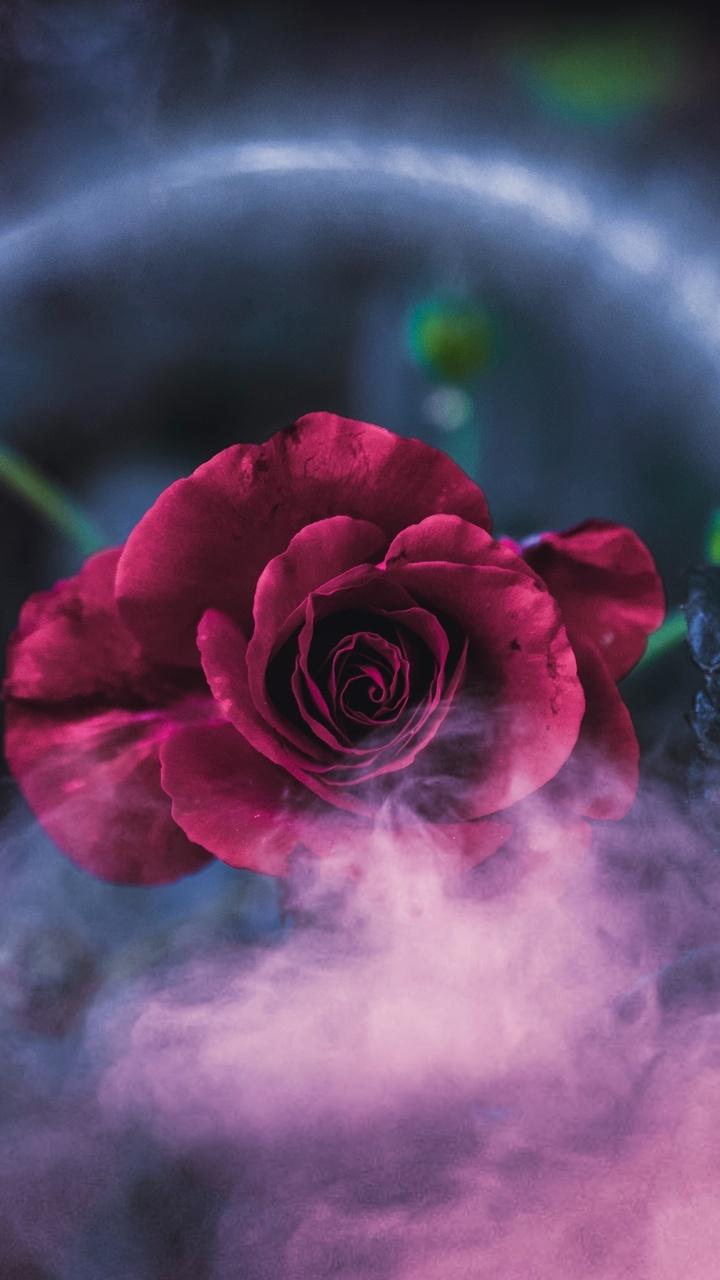 rose-dreamy-4k-91.jpg