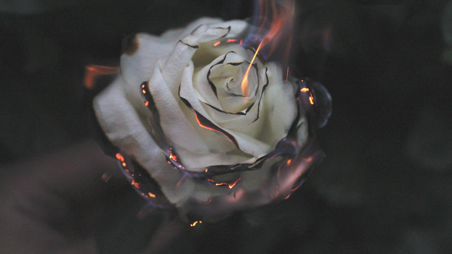 1920x1080 rose fire photography smoke laptop full hd 1080p hd 4k