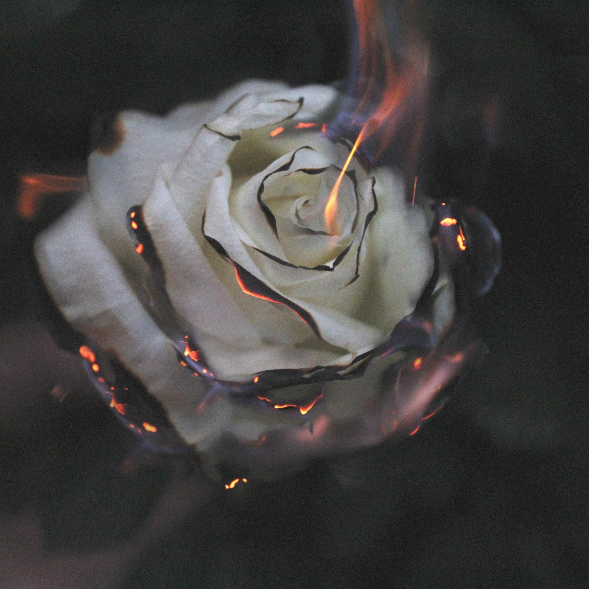 rose-fire-photography-smoke-fl.jpg