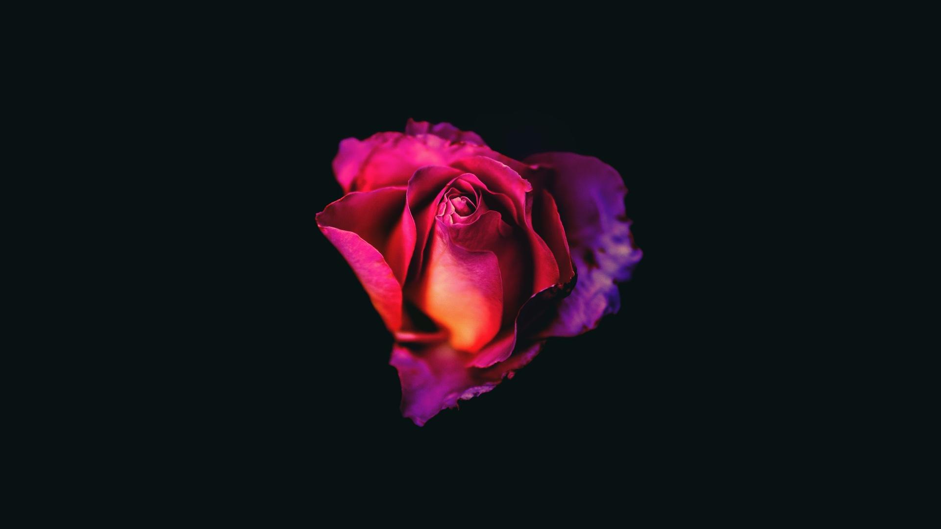 rose-oled-dark-8k-5a.jpg