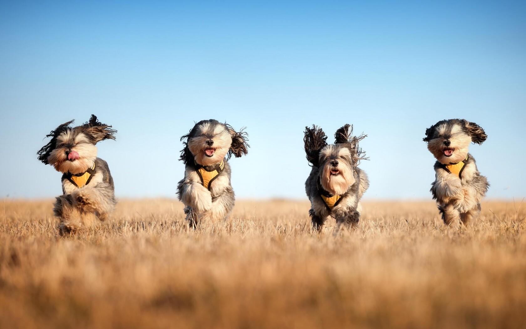 running-dogs.jpg
