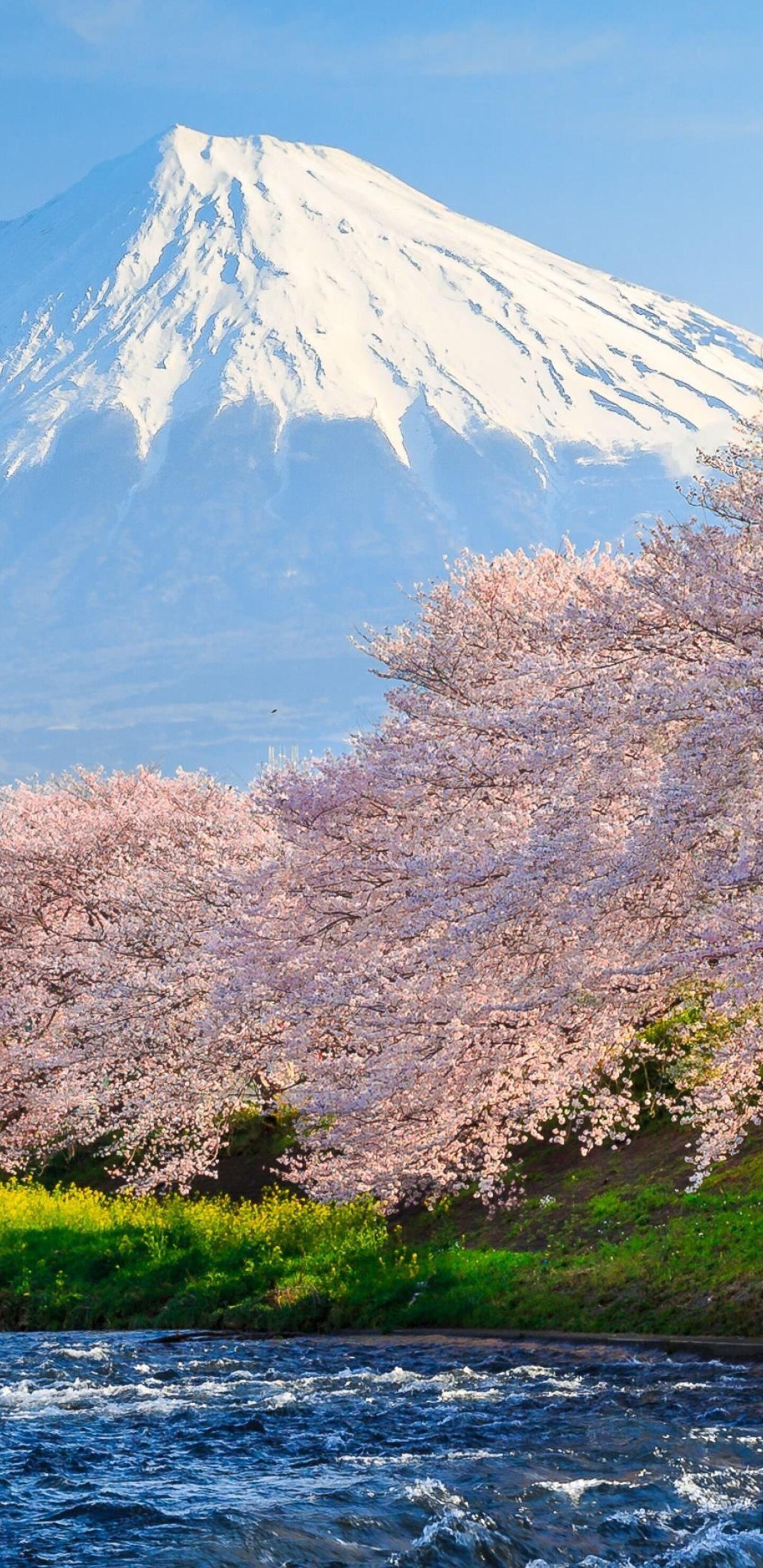 Sakura River Japan Do