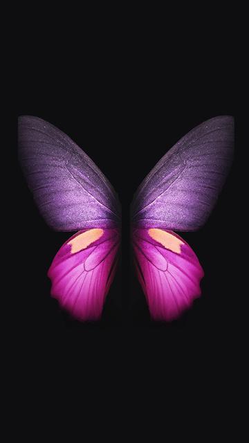 samsung-galaxy-fold-butterfly-qx.jpg