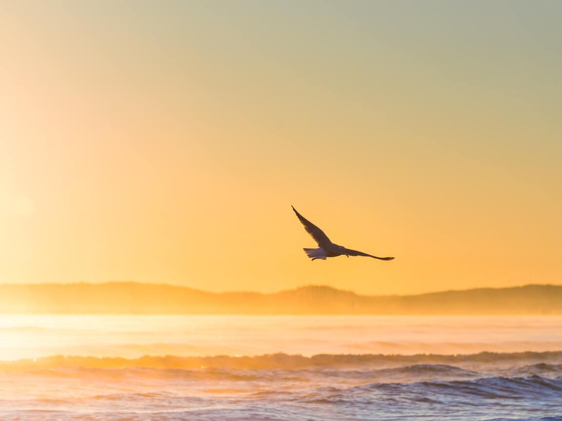 sea-gull-flying-in-epic-sunshine-5k-7a.jpg