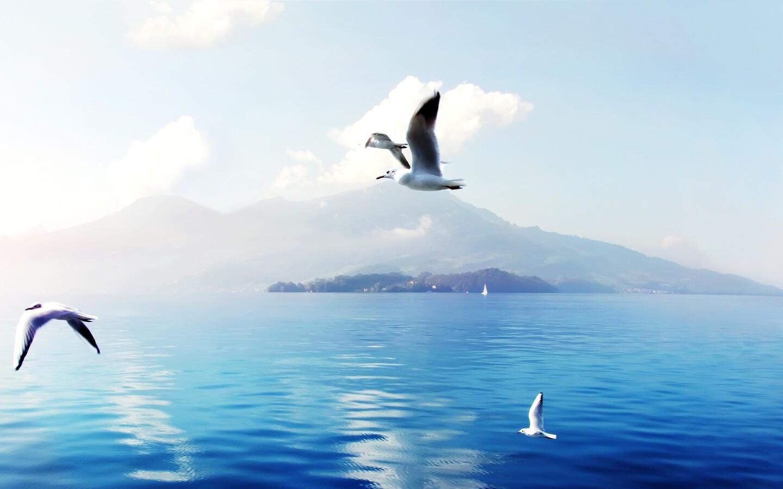 seagulls-in-switzerland.jpg