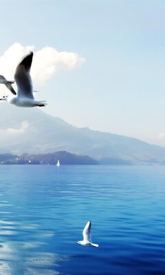 seagulls-in-switzerland.jpg