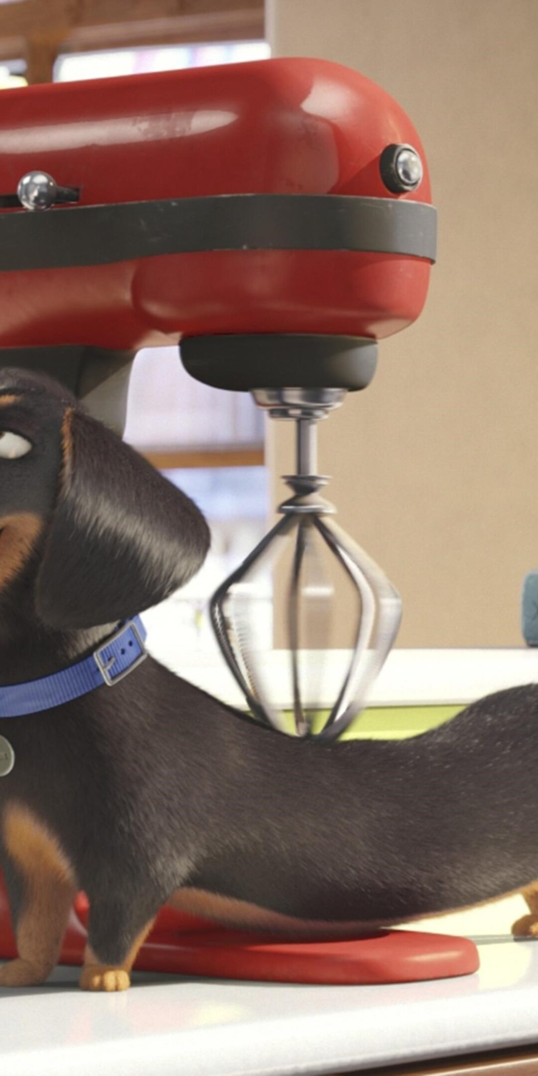 secrete-life-of-pets-movie.jpg