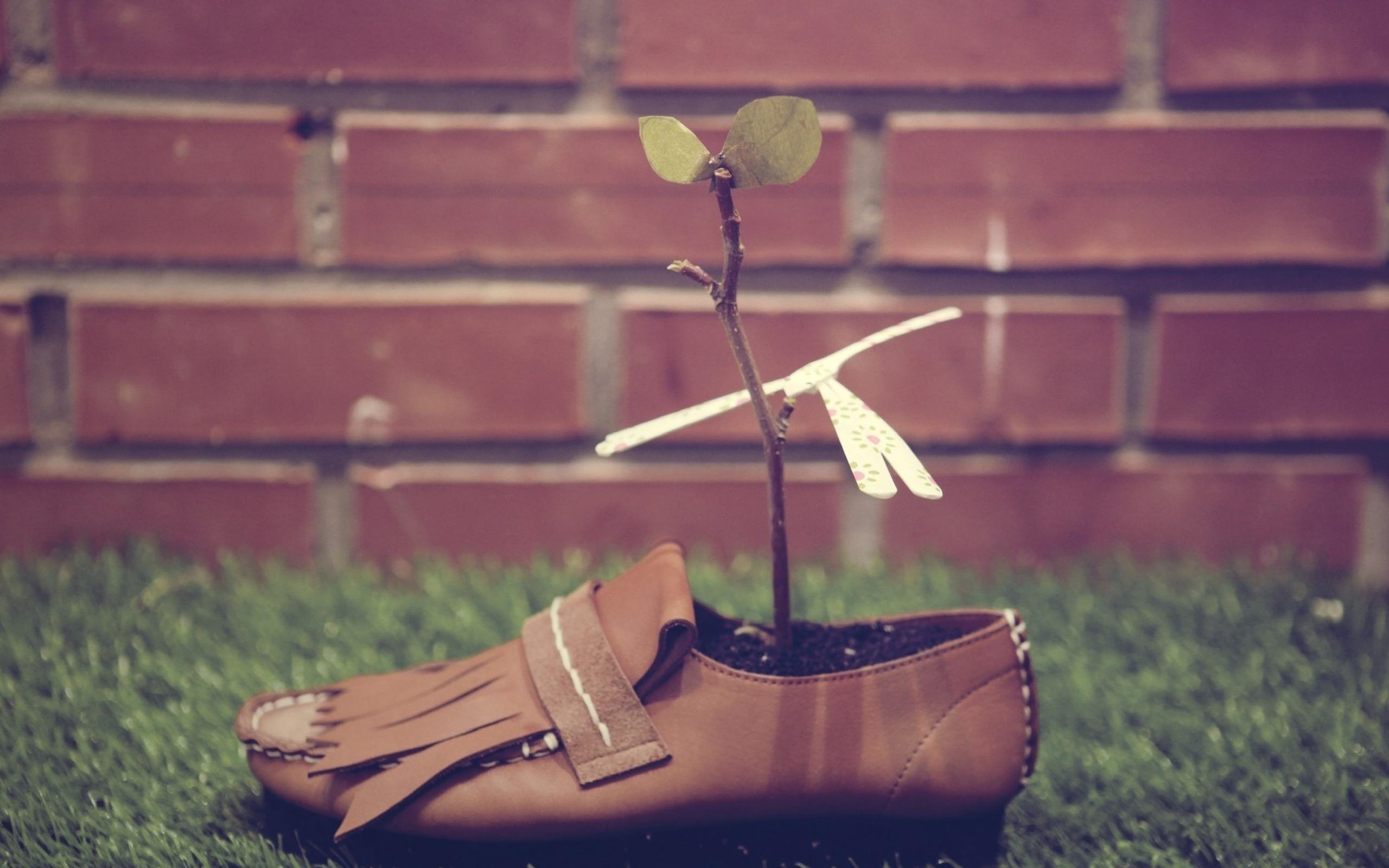 shoes-plants-grasses.jpg