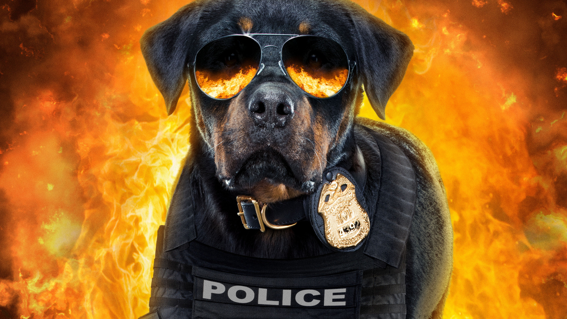 show-dogs-5k-poster-w6.jpg