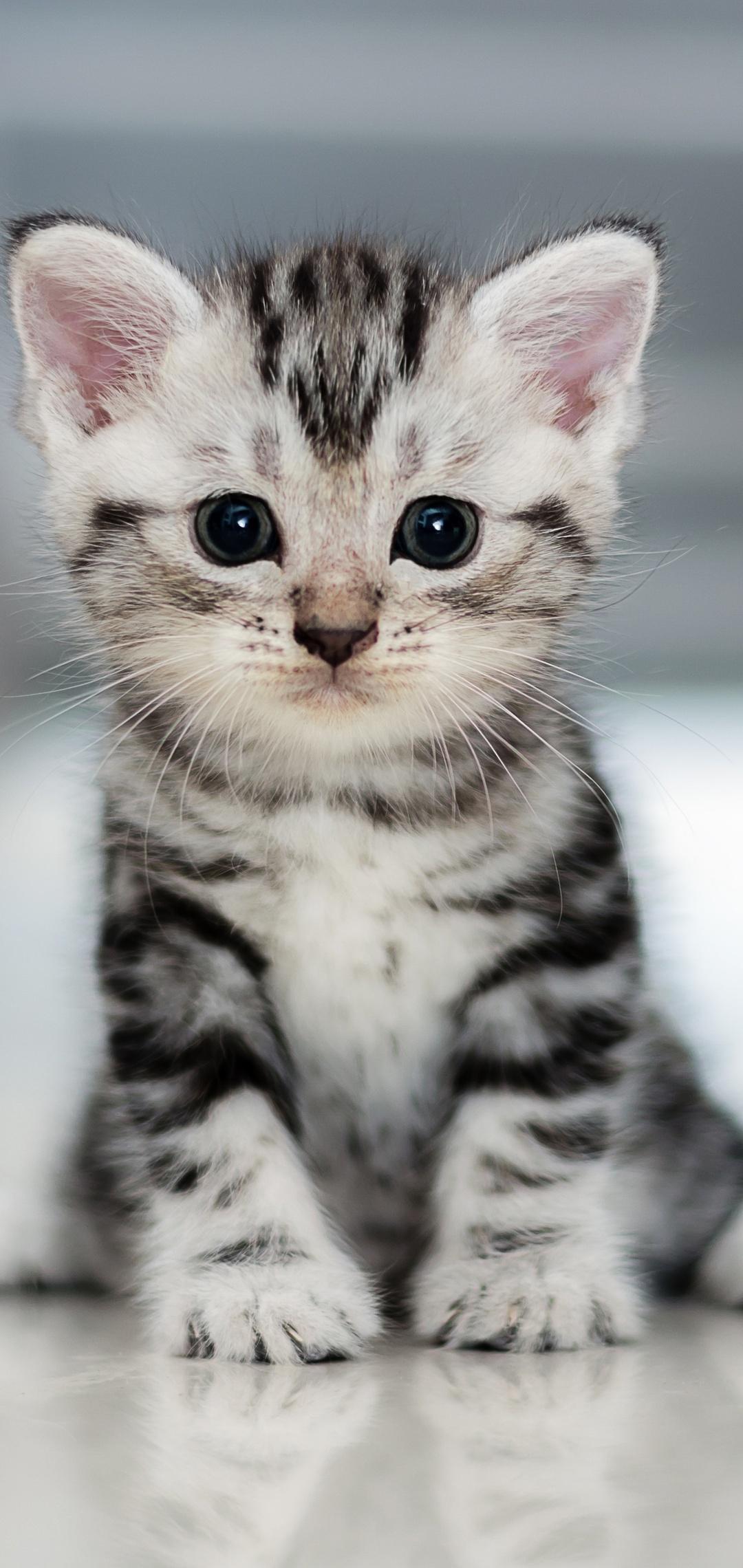 small-kitten-ba.jpg