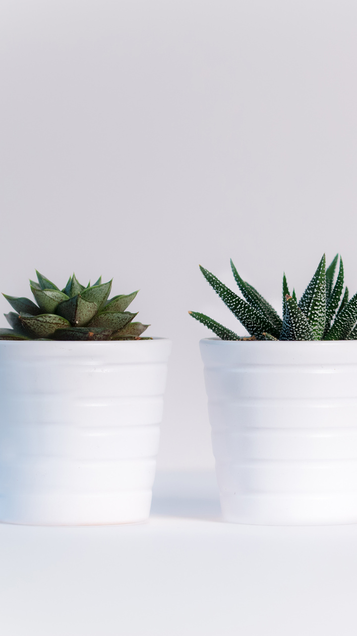 small-plants-in-white-pots-im.jpg
