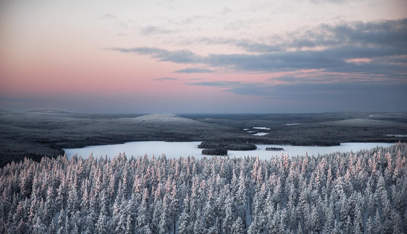 snow-covered-pine-trees-5k-p0.jpg