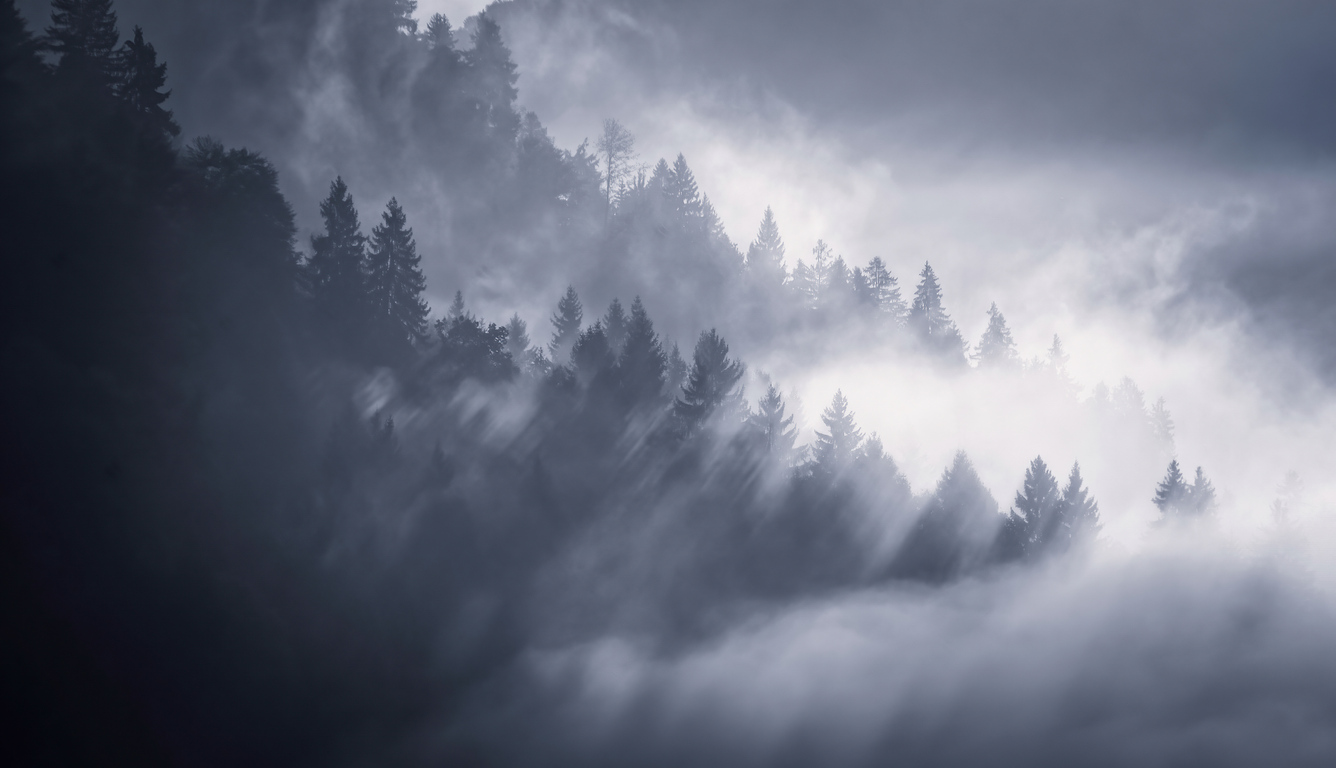 snow-fog-trees-5k-ty.jpg
