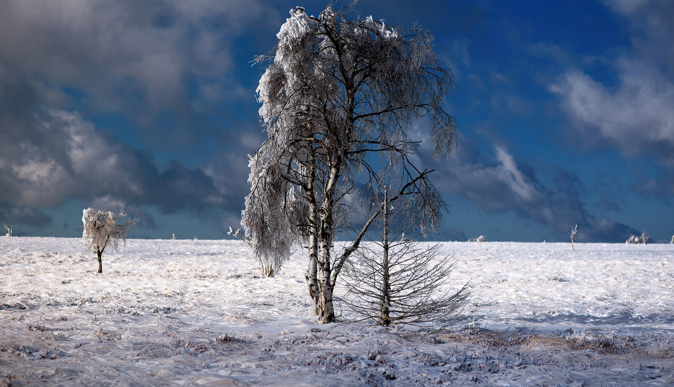 snow-outdoor-tree-4k-9u.jpg