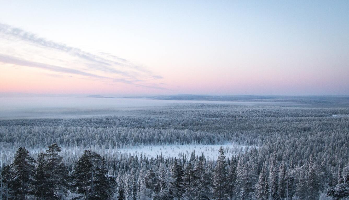 snow-plant-treeline-4k-mo.jpg