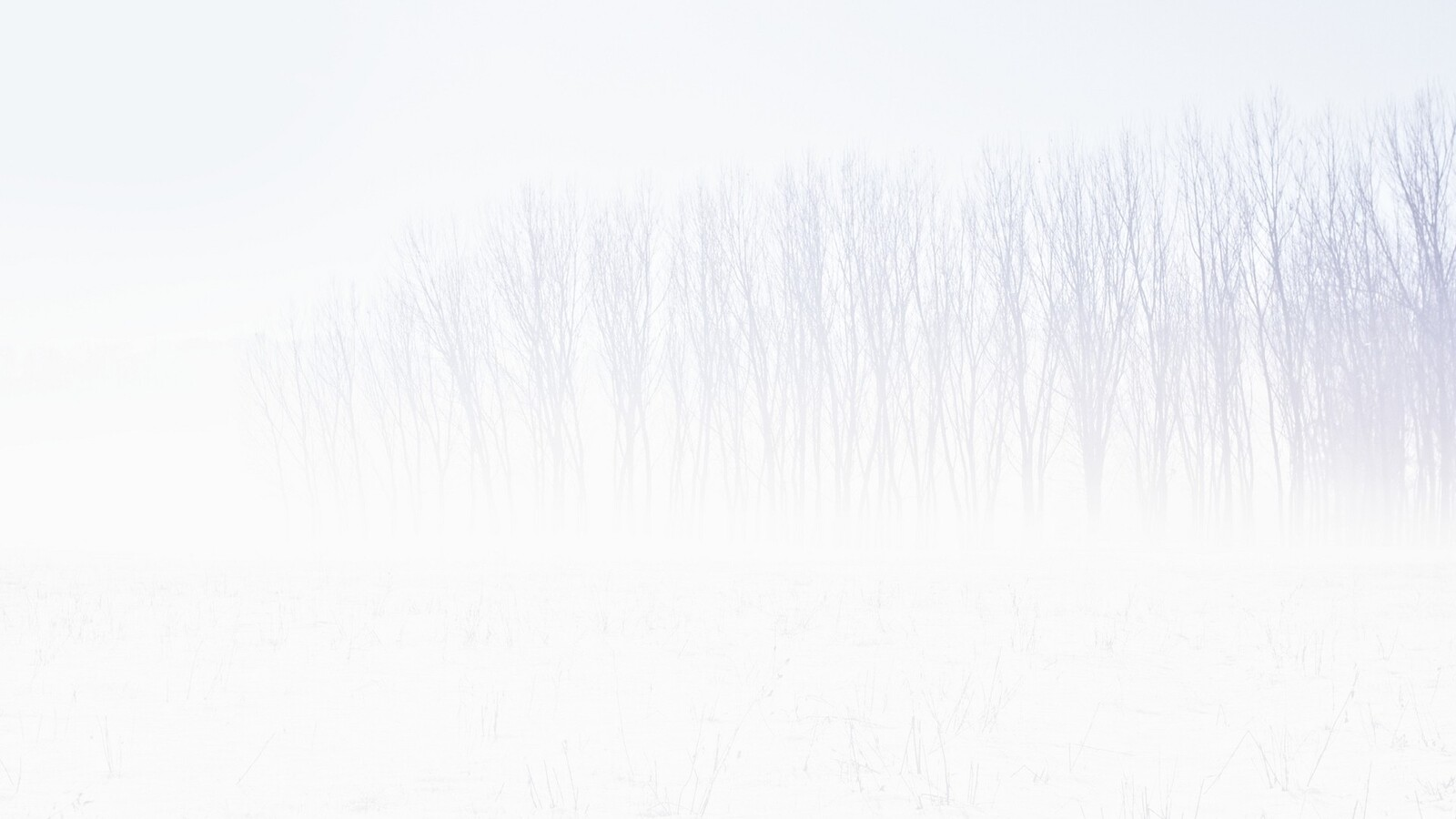 snow-trees-abstract-4k.jpg