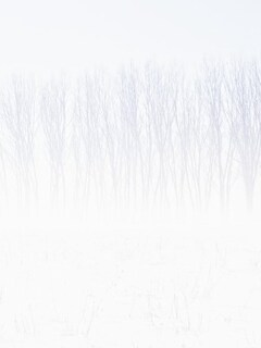 snow-trees-abstract-4k.jpg