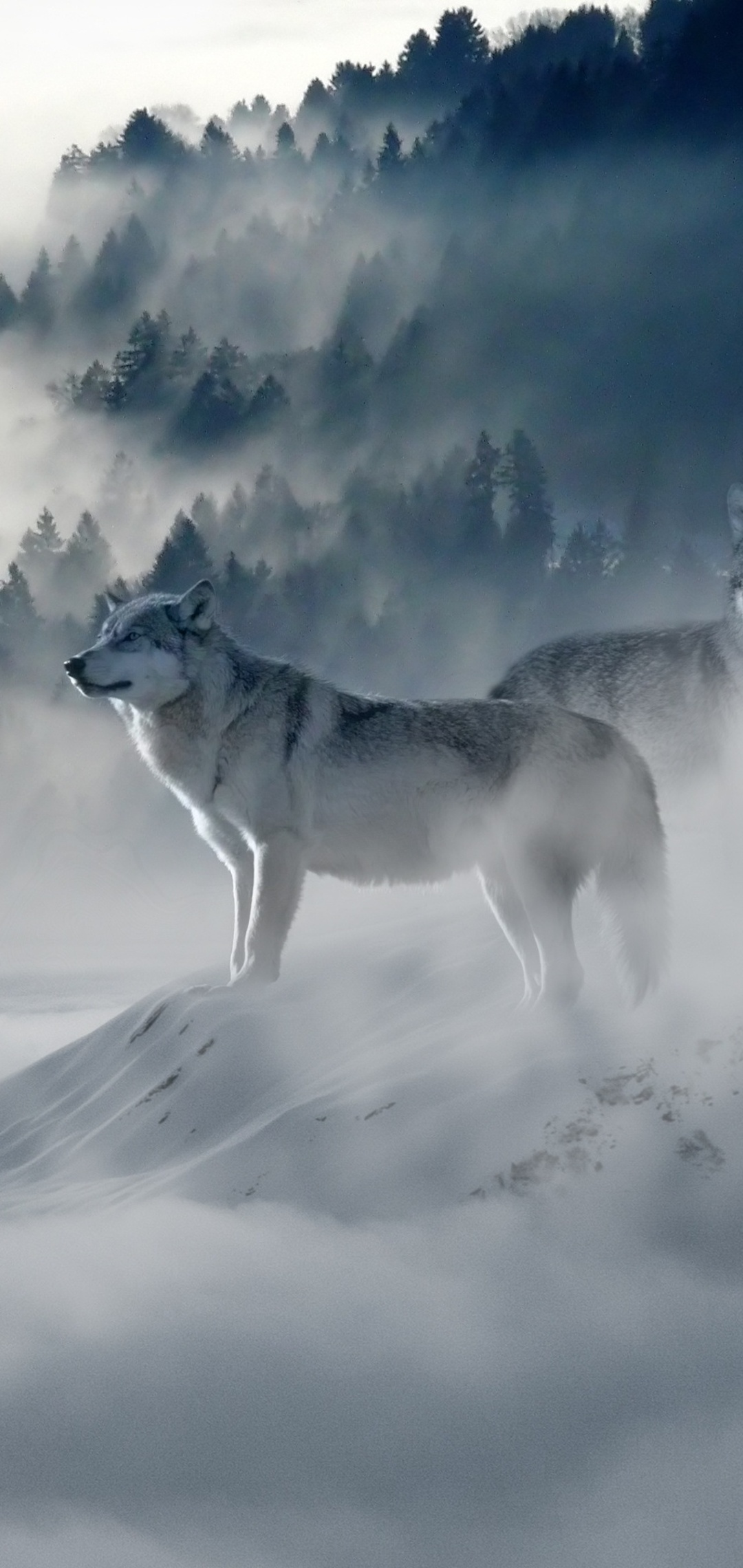 snow-wolf-ck.jpg
