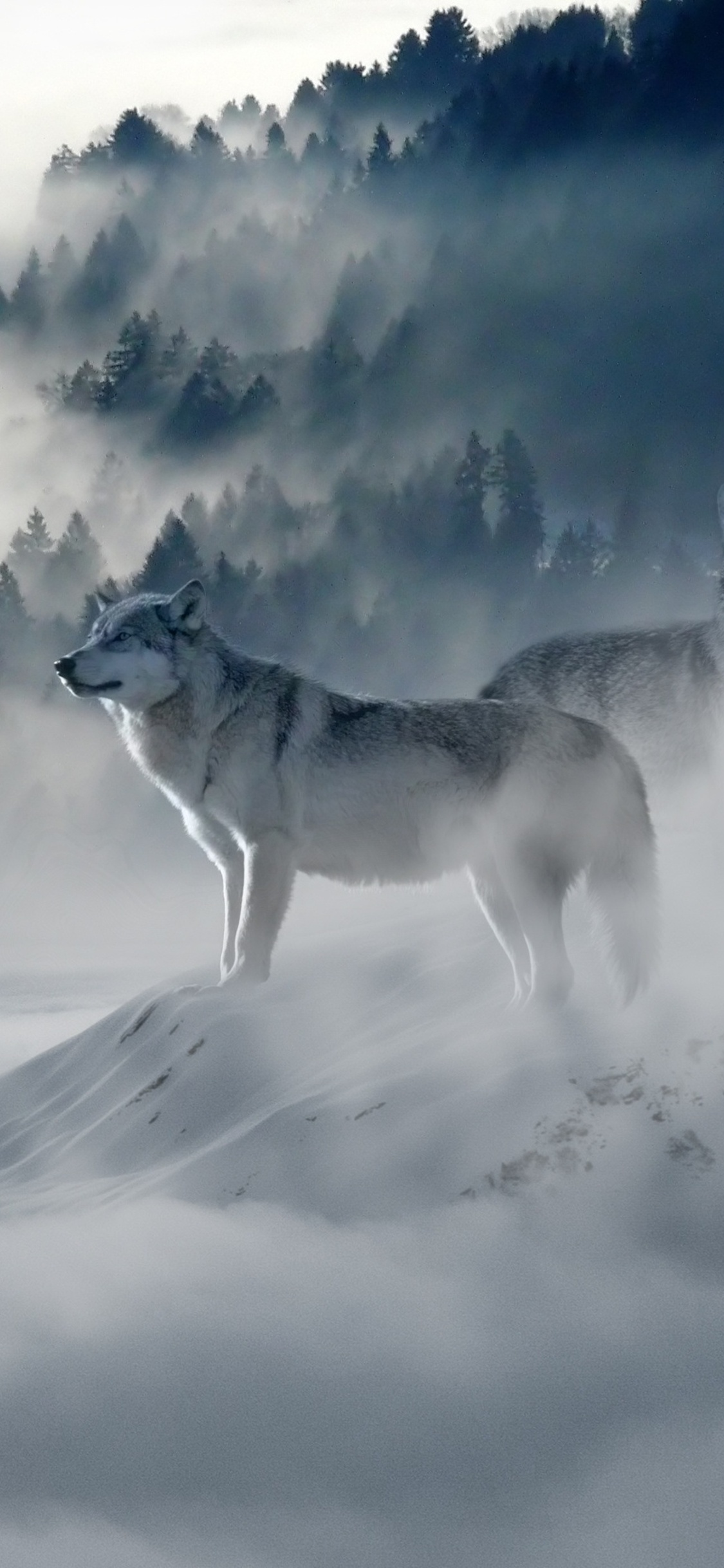 1125x2436 Snow Wolf Iphone Xs Iphone 10 Iphone X Hd 4k Wallpapers