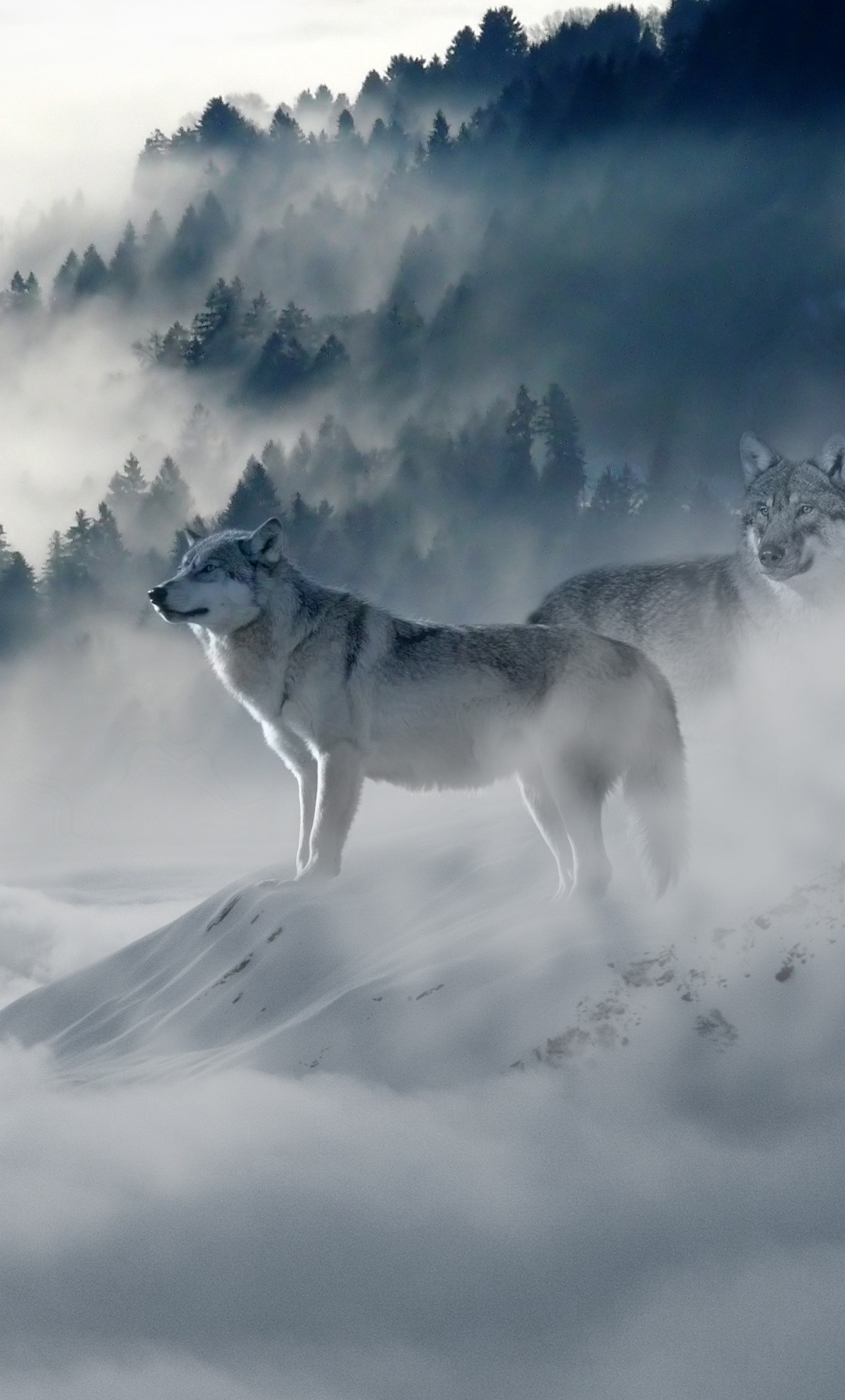 1280x2120 Snow Wolf iPhone 6+ HD 4k Wallpapers, Images ...