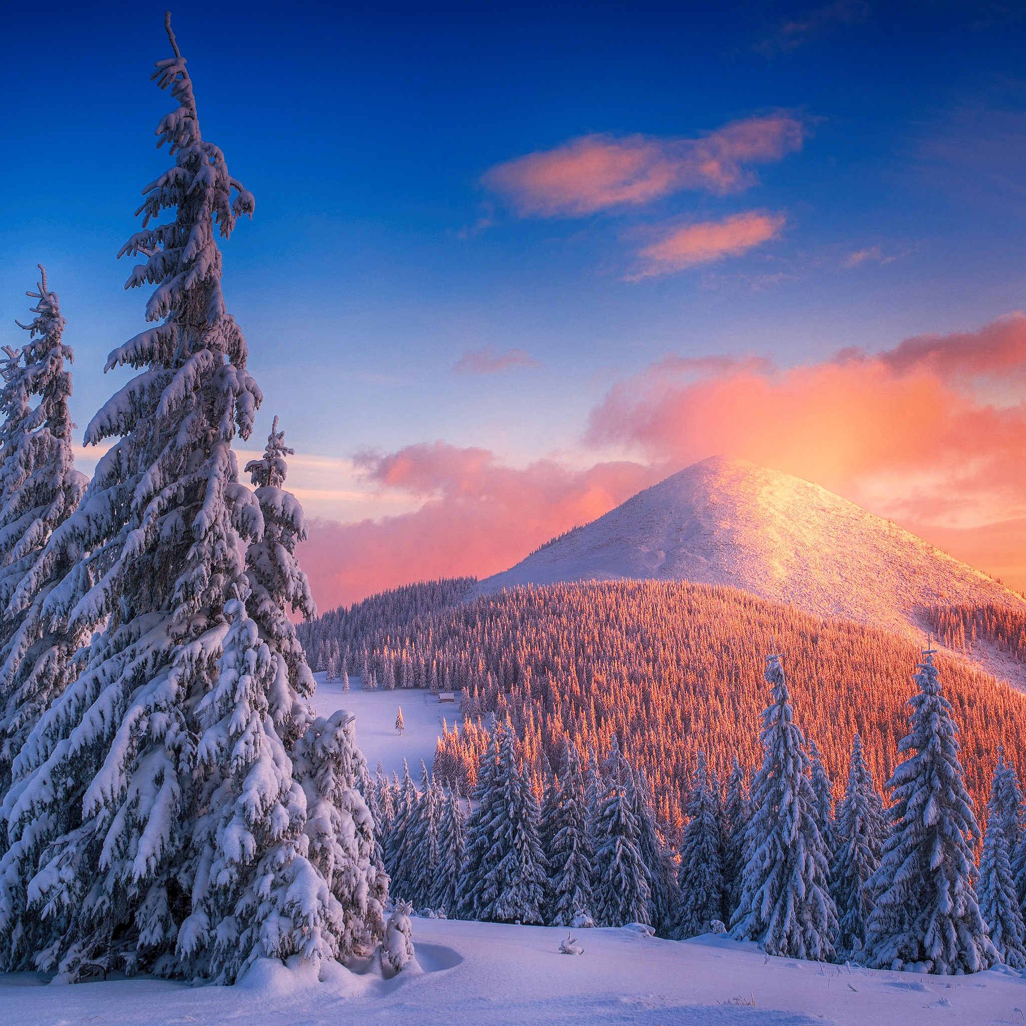 snowy-pine-trees-and-mountains-4k-9m.jpg