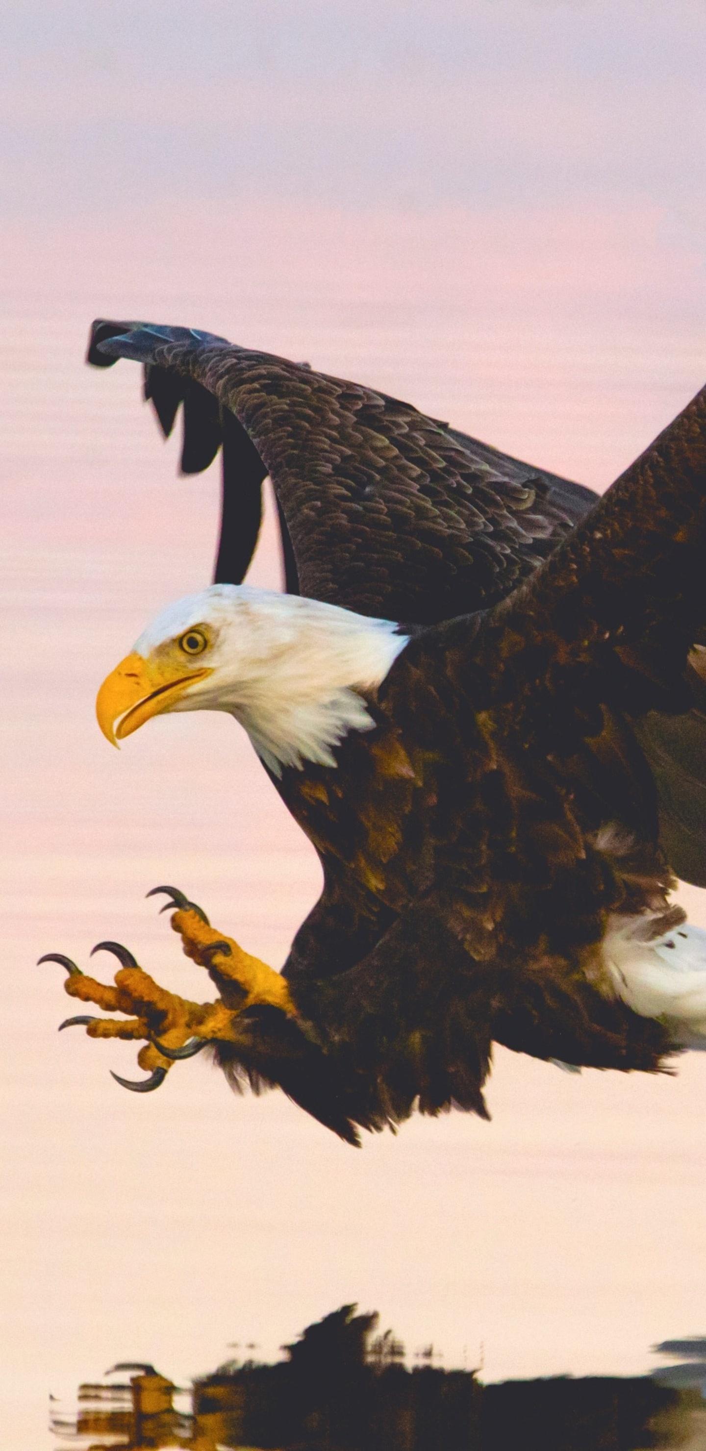 soaring-eagle-over-water-body-et.jpg