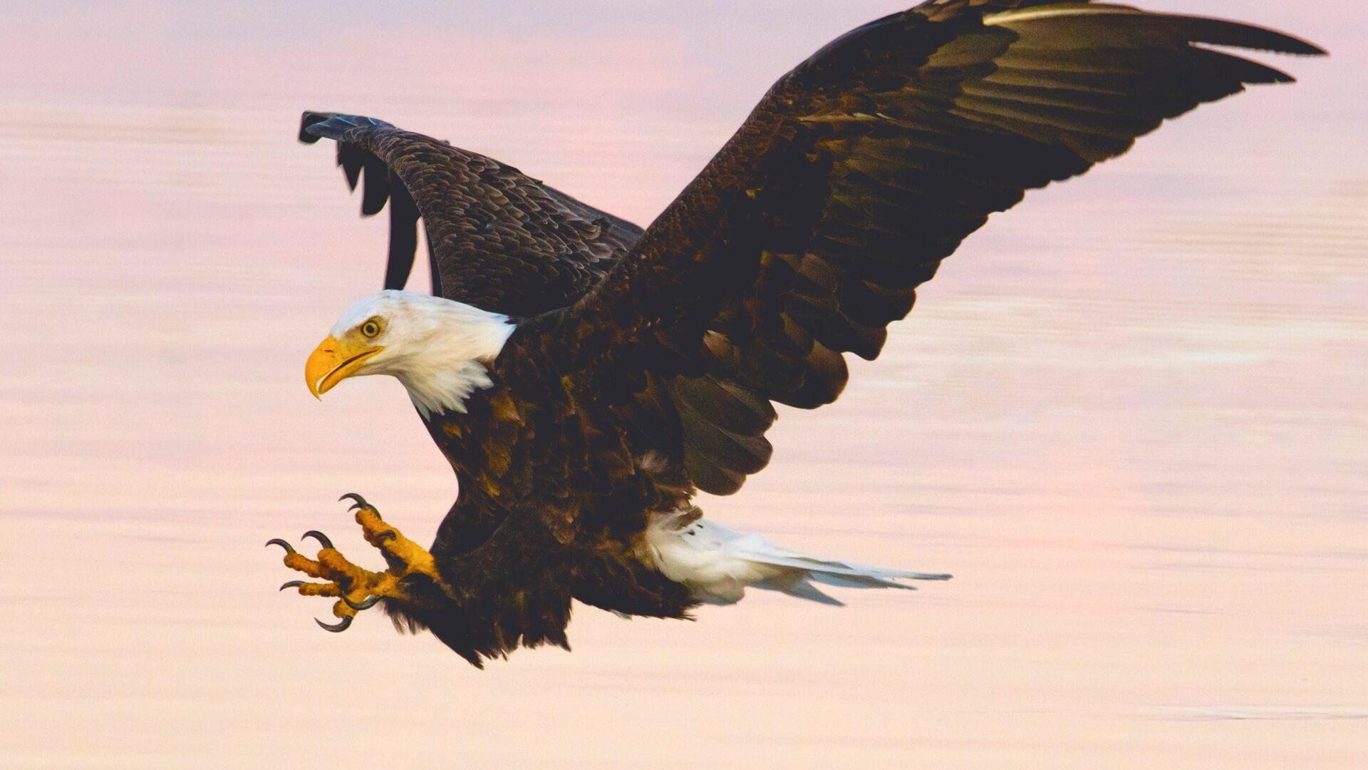 soaring-eagle-over-water-body-et.jpg