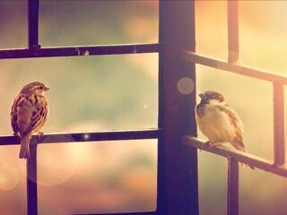 sparrow-sitting-on-railing-4k-kf.jpg